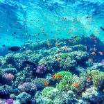 """#7 – """"Plant a Million Corals"""", la startup Greentech de la semaine"""