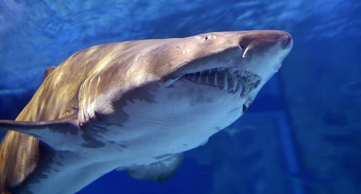 """La technologie au défi du """"risque requin"""" : solution ou illusion ?"""